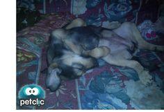 La postura más cómoda para dormir de Nala www.petclic.es