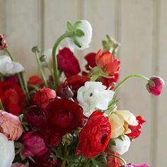 Fresh Ranunculus Bunch (mother's day)