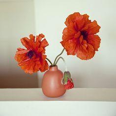 photo by photomatoux Heath Ceramics, Porcelain, Vase, Gift Ideas, Gifts, Instagram, Home Decor, Porcelain Ceramics, Presents