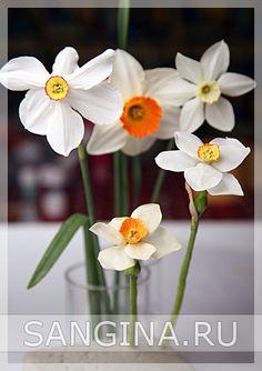 Нарцисс « Керамическая флористика. Цветы из холодного фарфора. Уроки и мастер-классы