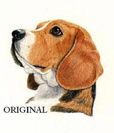 Are you interested in a Beagle? Well, the Beagle is one of the few popular dogs that will adapt much faster to any home. Beagle Art, Beagle Puppy, Needlepoint Patterns, Counted Cross Stitch Patterns, Dogs And Kids, I Love Dogs, Corgi, Dog Portraits, Dog Art