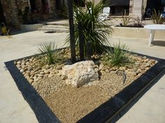 48 Meilleures Images Du Tableau Jardin Sec Et Succulentes Dry