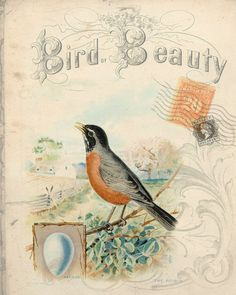 This is one of my favorites on BELLAVINTAGEHOME: Botanical Print Bird Beauty Robin