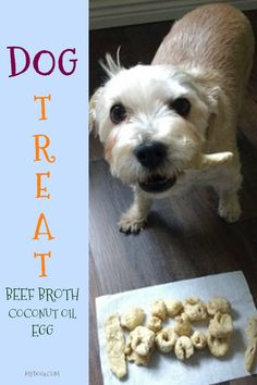 When the weather gets like this, I always want a warm bowl of soup. I saw some beef broth so I decided to make something for my dog with it. I am glad that I made the dog treat for him, I eat soup and he […] Homemade Dog Treats, Healthy Dog Treats, Dog Treat Recipes, Dog Food Recipes, Soup Recipes, Coconut Oil For Dogs, Dog Spay, Dog Cakes