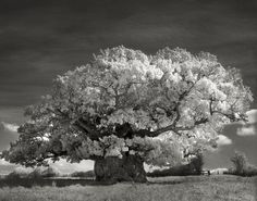 """San Francisco-based photographer Beth Moon set out to document the oldest, largest, and rarest trees in the world. She's been traveling for 14 years already, visiting five continents, with the result of 60 finest photographs that were recently printed out in the book titled """"Ancient Trees: Portraits of Time."""""""