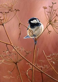 All images are the original artwork of nature artist and wildlife artist Dr. Jeremy Paul and are protected by international copyright laws. Wildlife Paintings, Wildlife Art, Wild Life, Nature Artists, Arte Pop, Bird Drawings, Bird Prints, Bird Art, Pet Portraits