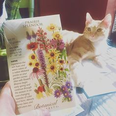 """""""I got some of my spring time happy mail yesterday 🌻🌿🌞 Thank you @botanical_interests for the kitty approved seeds 😻 #happymail #seeds #botanicalinterests #flowers #spring #garden #nature #beauty #dirttherapy #grow #cats #kitty #sheltercats #adoptdontshop"""" - bgj_bohemiangypsyjane (Instagram)"""