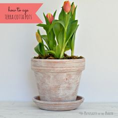 Tutorial for aging terracotta pots- make a paste by mixing Annie Sloan Chalk Paint and Wax
