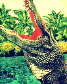 15 Best gator art images