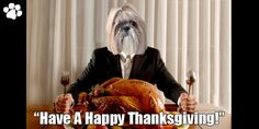 Hope You and Your Family Have A Happy Thanksgiving! Zen Master, Make It Through, Happy Thanksgiving, Cooking Ideas, Families, Turkey, Advice, Happy Thanksgiving Day, Turkey Country