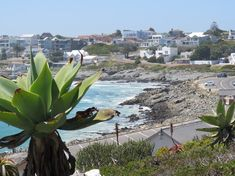 Yzerfontein in Western Cape Area Overview West Coast, Westerns, Cape, Profile, Beach, Plants, Mantle, User Profile, Cabo
