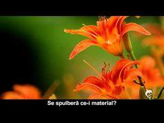 DORINŢA LUI HRISTOS - YouTube Film, Artist, Youtube, Plants, Movie, Film Stock, Artists, Cinema, Plant