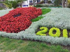 2014 poppy flower garden Poppy Flower Garden, Remembrance Day Poppy, Poppies, Flowers, Plants, Poppy, Plant, Royal Icing Flowers, Flower