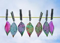 Leaves on a Clothes Line by Hal Halli Clothes Line, Leaves, Drop Earrings, Wall Art, Artists, Art, Store, Drop Earring, Wall Decor