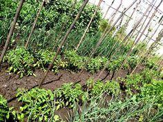Calendarul lucrărilor în grădina mea -Elisa – gradina mea de vis Plants, Garden