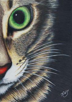 Half Cat Close UP by KW-Scott.deviantart.com