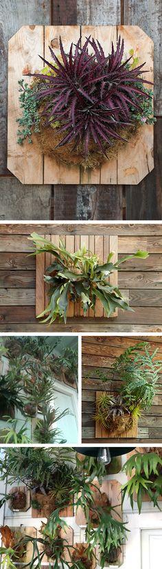 daniel staghorns_use Cool Plants, Air Plants, Garden Plants, Indoor Plants, House Plants, Cactus Plants, Planting Succulents, Planting Flowers, Small Courtyard Gardens
