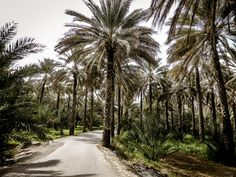 Oman images - Oasis