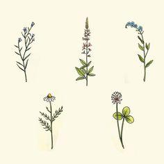 small wildflowers.