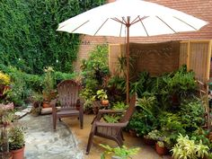 Patio y jardín con plantas