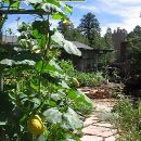 Cultivar hortalizas como plantas silvestres
