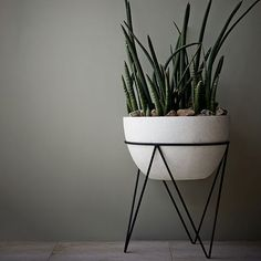 Iris Planter, Chevron Stand | West Elm | Green plants to soften black/white interior