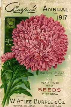 "heaveninawildflower: "" Front cover of W. Atlee Burpee & Co 'Annual for with an illustration of Burpee's new Aster 'American Beauty. Atlee Burpee & Co. Department of Agriculture, National Agricultural. Pub Vintage, Vintage Labels, Vintage Ephemera, Vintage Cards, Vintage Paper, Vintage Postcards, Images Vintage, Photo Vintage, Vintage Gardening"