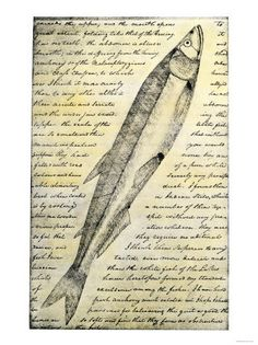 William Clark's Sketch of a Trout in the Lewis and Clark Expedition Diary Giclee Print  w Allposters.pl
