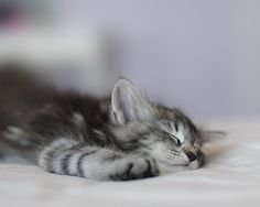 (notitle) - Cats, Cats and Cats & other Animals - Katzen Kittens And Puppies, Cute Cats And Kittens, I Love Cats, Crazy Cats, Cool Cats, Kittens Cutest, Ragdoll Kittens, Funny Kittens, Tabby Cats