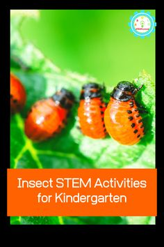 Learning about bugs? These insect STEM activities for kids teach kids the basics about bug anatomy, insect life cycles, and more all using STEM insect activities to boost science learning and education! Stem Projects For Kids, Insect Activities, Kindergarten Stem, Stem Challenges, Business For Kids, Bugs, Life Cycles, Learning Tools, Education