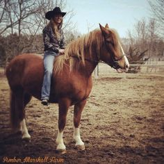amber marshall farm - Google Search