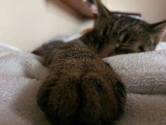 #cat #mylove #love