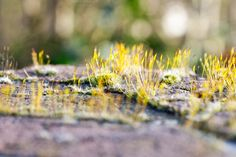 Check out Miniature Landscape by Creative Lion on Creative Market