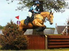 Eye Catching 15.1hh 7yr old Dun Connemara x TB mare - Newcastle Upon Tyne, Tyne & Wear, UK - Horse & Hound