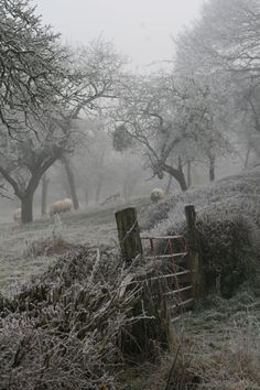 Gardening Autumn - Frosty Orchard at Mordiford. lovely place to visit summer or winter:) - With the arrival of rains and falling temperatures autumn is a perfect opportunity to make new plantations Winter Szenen, Winter Time, All Nature, Winter Beauty, Farm Life, Country Life, Country Living, Belle Photo, Mists