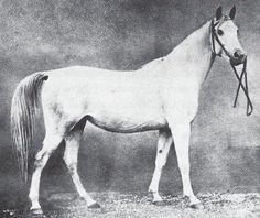 Selma V, 1871