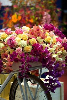 Ana Rosa bicycle of flowers and roses My Flower, Pretty Flowers, Colorful Flowers, Fresh Flowers, Mystical World, Beautiful Roses, Beautiful Soul, Floral Arrangements, Good Morning