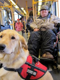 service-dogs-and-the-law