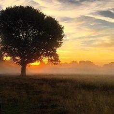 Sunrise at a Bushy Park ☀️ #bushypark #sunrise #fog #mist #ig_nature #nature #sky #londonwanderings #screaming_shots #sc_08_2015