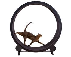 ONE FAST CAT EXERCISE WHEEL BLACK - My Pet Warehouse - $389.99