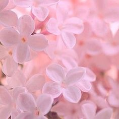 Imagem de pink flowers and rose p i n k pinterest pink i simple die for flower aesthetics there so cute and peaceful next will be purple aesthetics mightylinksfo