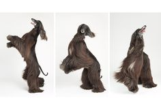 Full service pet photography and beautifully printed products Animals And Pets, Cute Animals, Tibetan Terrier, Pet Photographer, Afghan Hound, Photographic Studio, Dog Portraits, Dog Grooming, Animal Photography
