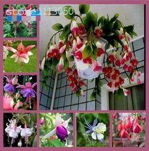 200 sztuk/worek Fuksji Nasiona, Kwiaty doniczkowe, Begonia latarnia, Nasiona kwiatów Na Sprzedaż Dom Ogród Rolnicze(China (Mainland))