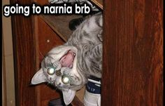 hey guys I'm back from Narnia.I would totally LOVE living in Narnia. Cat Quotes, Animal Quotes, Animal Memes, Funny Animals, Cute Animals, Funny Cat Captions, Funny Cat Photos, Funny Pictures, Animal Captions