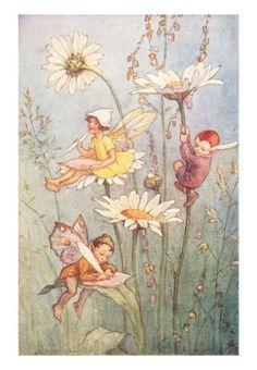 Garden Fairies in the daisys