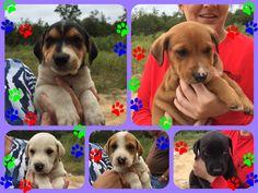 Milan pups #rescuemutt #fureverhome #rescue #whywerescue #adoptdontshop #dog #resuepups #dogsofinstagram #pupsofinstagram #rescueonly #dogs #doglover #mixbreed #ilovedogs #puppy #pup #rescuedog #puppylove #dogsofadirondacksaveastray #shelterdogsrock #mansbestfriend #dogstagram #pet #ilovemydog #adoptme #followme #savealife #petfinders #adoptapet #adoption