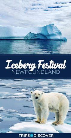 Anthony, Newfoundland's Unique Iceberg Festival St Anthony Newfoundland, Newfoundland Canada, Newfoundland And Labrador, Canada Travel, Travel Usa, Newfoundland Icebergs, East Coast Canada, Road Trip, Alaska