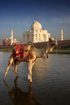 Taj Mahal, India. www.whywaittravels.com