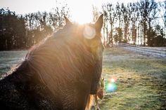 16 Degree Equus Ferus Caballus (horse)