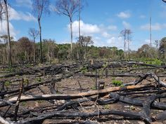 The Bureau and Repórter Brasil have discovered that a major Brazilian meat company bought cows from a ranch that had been fined weeks earlier for breaking environmental protection rules Global Supply Chain, Cattle Farming, Three's Company, Amazon Rainforest, Destruction, City Photo, Environment, World, Lakes